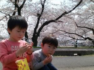 桜とハルくん&トモくん