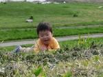草を食べるトモくん
