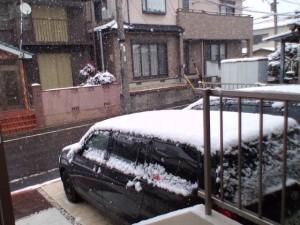 ・・・・・雪やん。